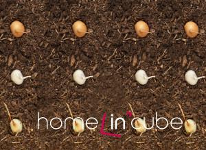 Do nezamrzlé půdy lze vysévat cibuli, petržel, pastiňák a mrkev, které vzejdou brzy na jaře.