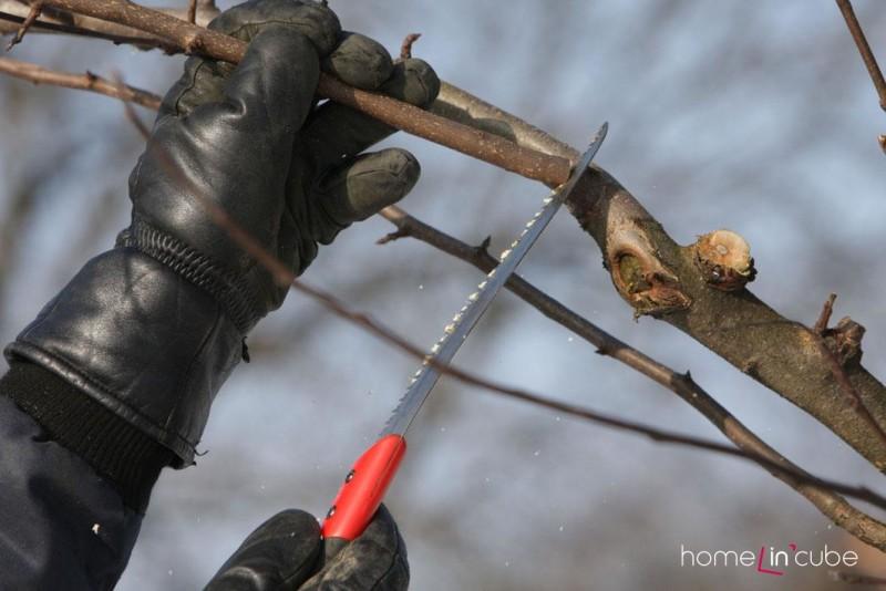 U ovocných stromků provedeme průklest, zmlazujeme lísky.