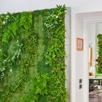 Stěna z živých květin je příjemným zpestřením každého interiéru.