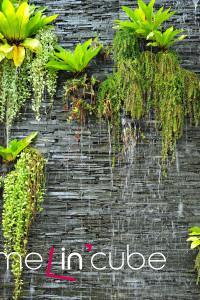 Díky popínavým rostlinám se snižuje také vlhkost, kdy déšť po listech obvykle steče a k samotné omítce se nedostane.