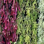 Popínavé a splývavé rostliny mají vedle funkce izolační i nezanedbatelné poslání hravě a barevně osvěžit stavby.