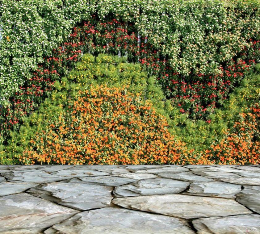 Popínavé rostliny využijeme všude tam, kde je nutno šetřit s prostorem a zároveň dodat stěnám novou barevnou kompozici.