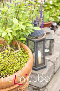 V květináčích se může dobře dařit i borůvkám.