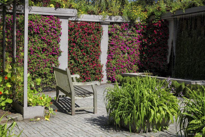 Stěny s popínavými barevnými letničkami pomohou na zahradě vytvořit malebné zákoutí.
