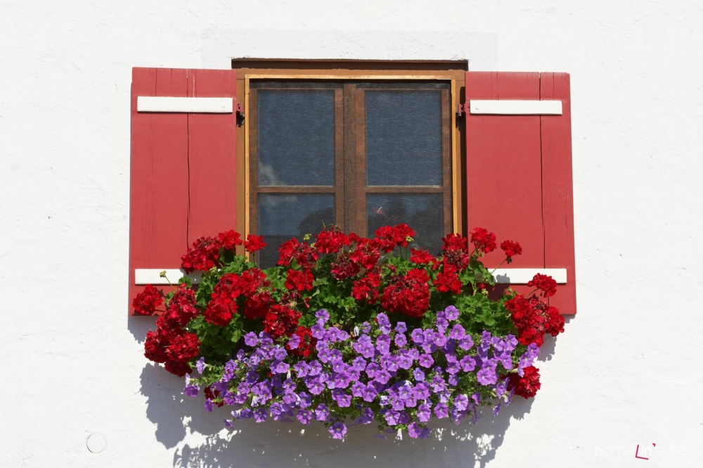 Barvu květin zvolte s ohledem na pozadí. Ideální je kontrast, tehdy květy skutečně vyniknou.