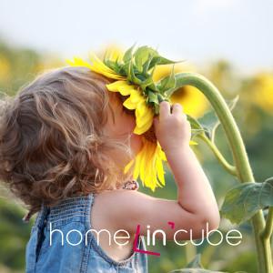 Ozdobou jakékoliv zahrádky je slunečnice roční (Helianthus annuus).