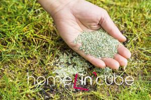 Od poloviny dubna do konce května doséváme holá místa a zakládáme trávník výsevem, v pozdním létě pak od poloviny srpna do poloviny září.