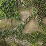 Skalničky jsou nenáročné rostliny, které dobře snáší osluněná stanoviště i chudou půdu.