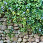 Převislé rostliny zakryjí zeď alespoň z části.