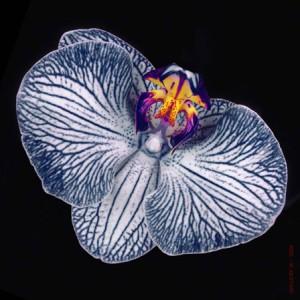 Orchideje přesazujeme jednou za dva roky a to v období, kdy nekvetou.