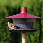 Krmítko pro ptáky Finch, plast, cena 249 Kč