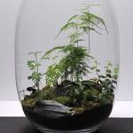 Rostliny i půda stále odpařují vodu, která se vrací zpět do půdy.