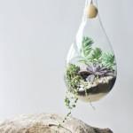 Do nádob se zpravidla sází rostliny, které nekvetou.
