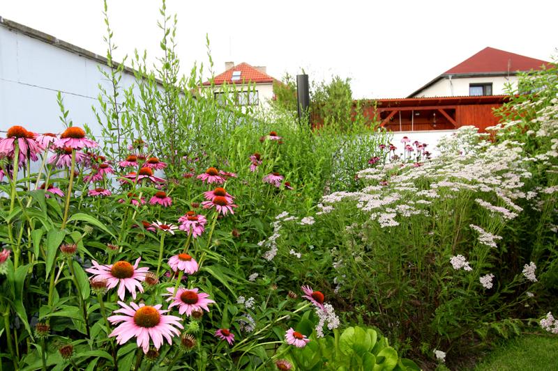 Zahradě sluší jednoduchost, květy laděné spíše do jedné barvy v různých odstínech.
