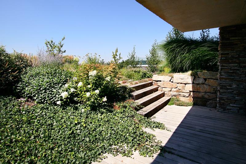 Trávník patří k tomu úplně nejnáročnějšímu, co si můžeme do zahrady pořídit. Pořád sekáme, hnojíme, provzdušujeme. Naproti tomu husté trvalkové a dřevinné výsadby jsou celoročně krásné, pořád jiné a vyžadují minimální údržbu.