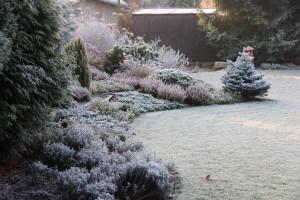 Zahrada může být krásná i s ranní námrazou.