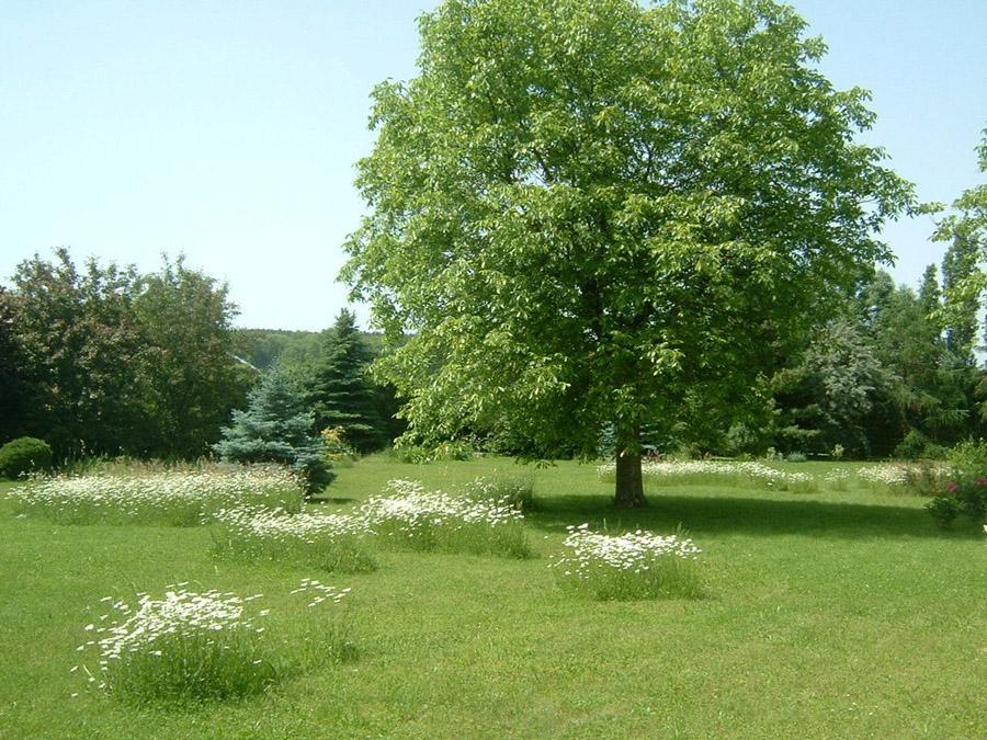 Louka pod ořešákem sekaná na různé výšky trávy