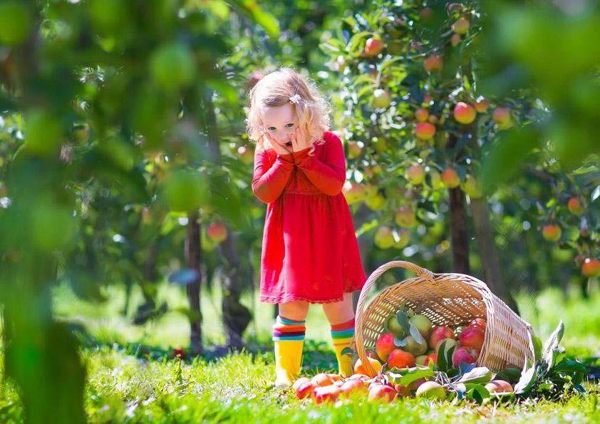 03949c171 Vyvarujte se chyb při zakládání zahrady - HomeInCube