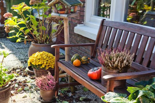 podzim v zahradě