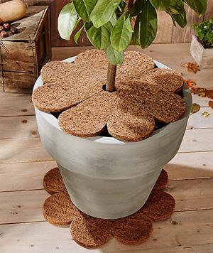 Kokosová deska na přikrytí zeminy v květináči zamezí prochladnutí kořenů a má i dekorativní účel.
