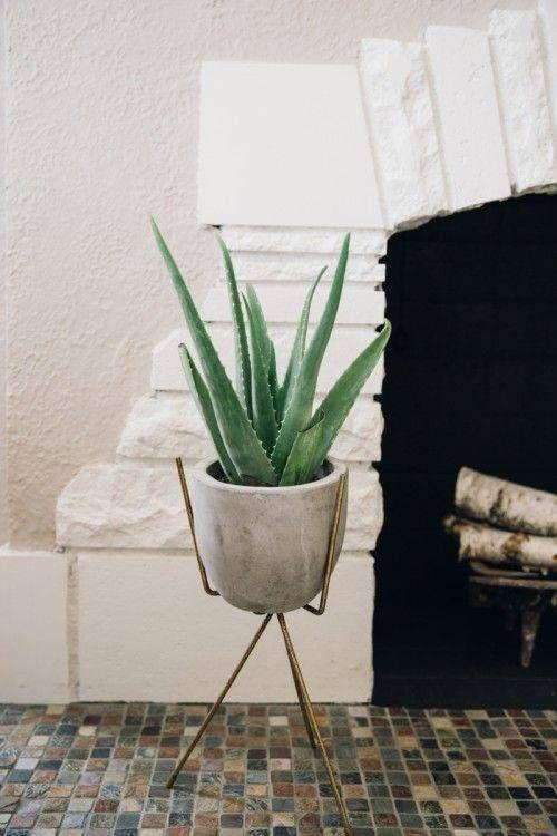 Aloe vera (aloe léčivá), původ: Kapverdské ostrovy, Kanárské ostrovy, Středomoří, péče: vyvarujte se příliš vlhké půdě, vlétě přihnojujeme, rozmnožování: u starších rostlin výběžky, zvětších rostlin lze brát vrcholové řízky
