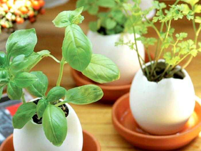 Do skořápek zasaďte bylinky