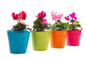 Pestrý květ bramboříku podpoříte i stejně barevně pojatým květináčem.